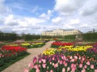 rundale_palace_with_tulips.jpg